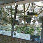 barcelona_zoo_affen_2