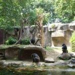 barcelona_zoo_affen_gehege