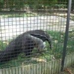 barcelona_zoo_ameisenbaer