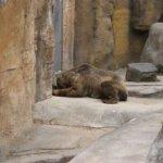 barcelona_zoo_baeren