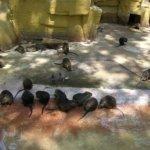 barcelona_zoo_bieber