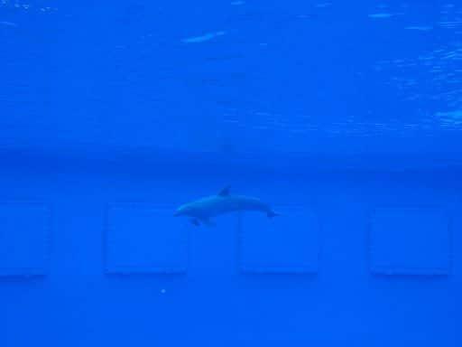barcelona_zoo_delphin_2