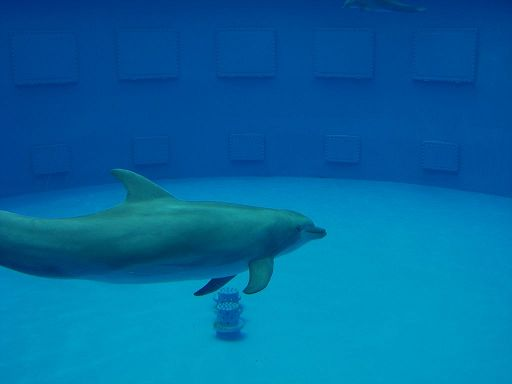 barcelona_zoo_delphin_4