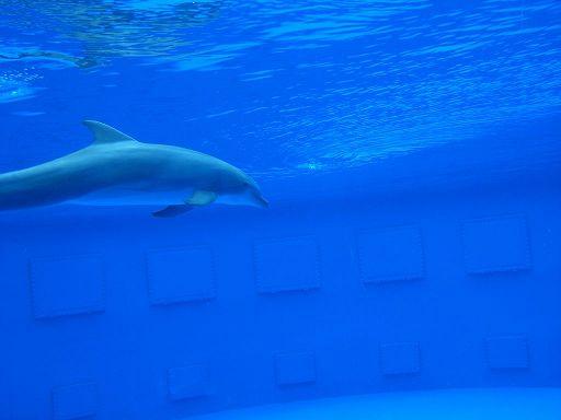 barcelona_zoo_delphin_5