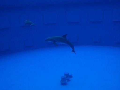 barcelona_zoo_delphin_becken