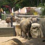 barcelona_zoo_elefant