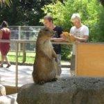 barcelona_zoo_erdmann