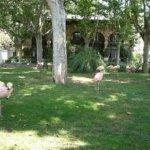 barcelona_zoo_flamengo