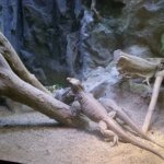 barcelona_zoo_leguan