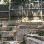 barcelona_zoo_loewe