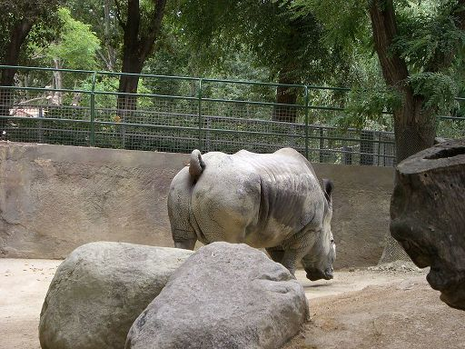 barcelona_zoo_nasshorn