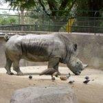 barcelona_zoo_nasshorn_gehege