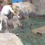 barcelona_zoo_pinguine