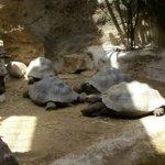 barcelona_zoo_schildkroete