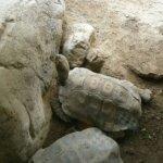 barcelona_zoo_schildkroeten_gehege