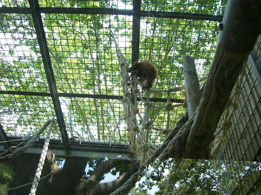 barcelona_zoo_schimpanse