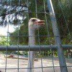 barcelona_zoo_strauss