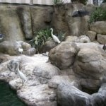 barcelona_zoo_vogel_5