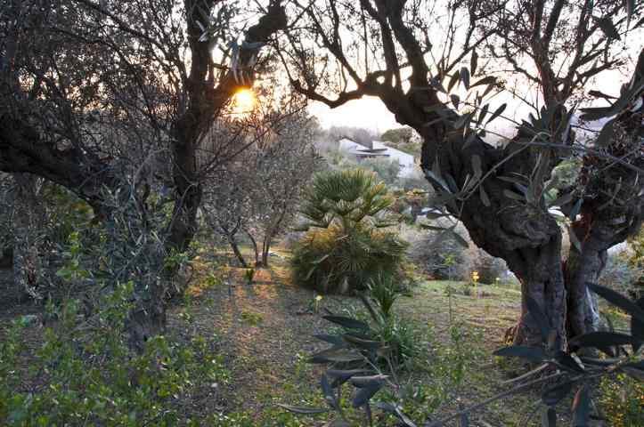 Jardi Botanic Barcelona Pflanzen
