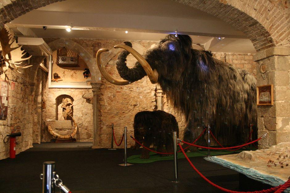 Museu del Mamut Barcelona