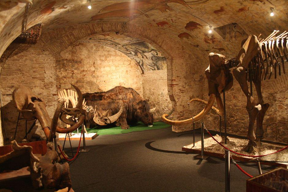 Museu del Mamut Skelett