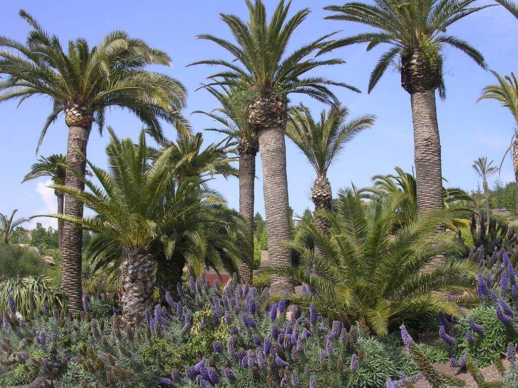 Jardi Botanic Palmen